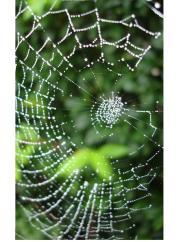 spider-s-web-1197641